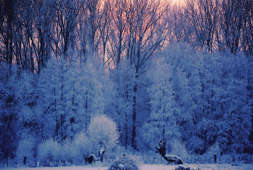 trees winter sunset brussels snow tree hiver bruxelles neige soir arbre