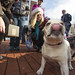 20121208_mac_dogdays_236