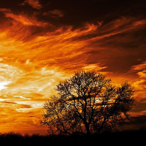[フリー画像素材] 自然風景, 雲, 朝焼け・夕焼け, 樹木, 風景 - イギリス ID:201212192000