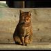Cat of Istanbul, outside Hagia Sophia by Mr. Alejandro Zeta