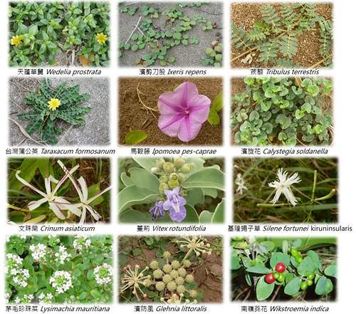 多樣的沙丘生物多樣性