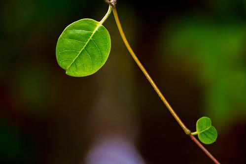[フリー画像素材] 花・植物, 葉っぱ ID:201212210800
