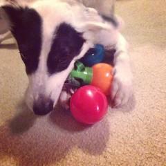 Pup goes nom nom