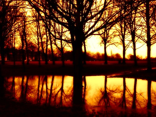 light reflection tree water rain landscape gold leicester tint mobilephone iphone