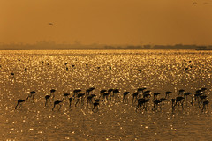 Flamingos !!! by bmahesh