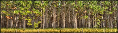 pinetrees farmcountry topazfilters nikkor1855mmzoom nikond3100hdr