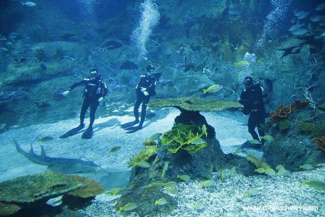 RWS S.E.A Aquarium 630