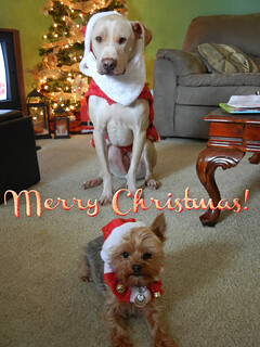 Caesar and Sookie Holiday Pic