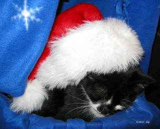 Christmas is Almost Over ~ Santa Montana Sleeps