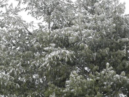 Dec 26 2012 Snowing