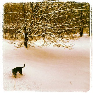 Lola wanted everyone to know we've got #snow  #driveway #dobermanmix #dogstagram #happydog #newengland