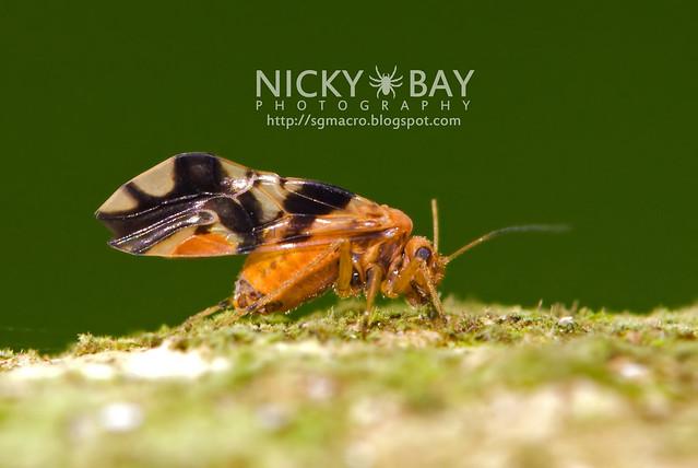Bark Louse (Psocoptera) - DSC_7186