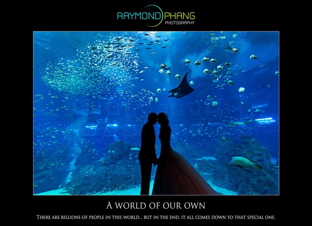 Raymond Phang Photography - Oceanarium Pre-Wedding
