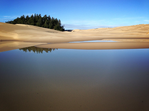 sand dunes, pond, and tree island on Oregon's south coast