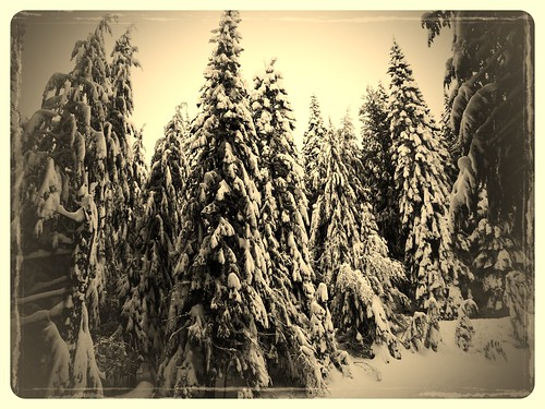 Snow shoeing mt Spokane
