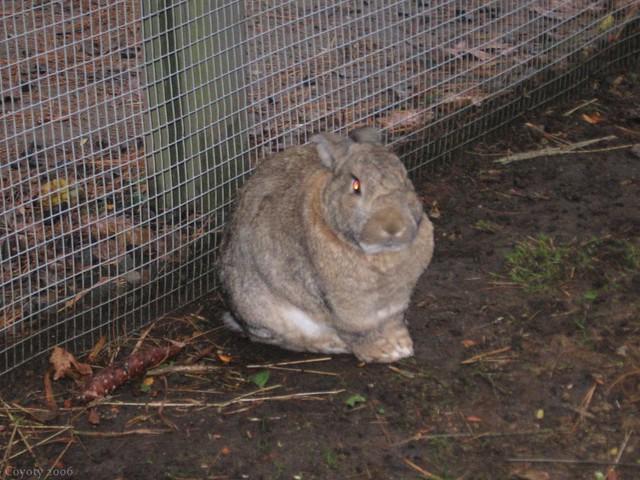 Eviler bunny