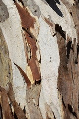 Brown Bark 011