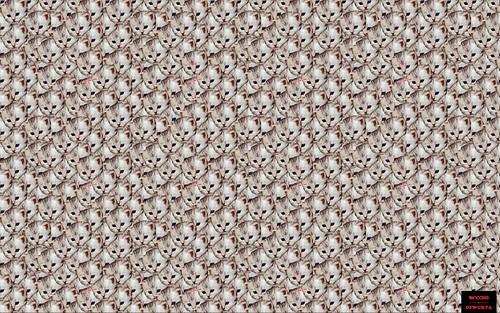 Golf Wang Cat Wallpaper 8369056644_d6b8886626.jpg