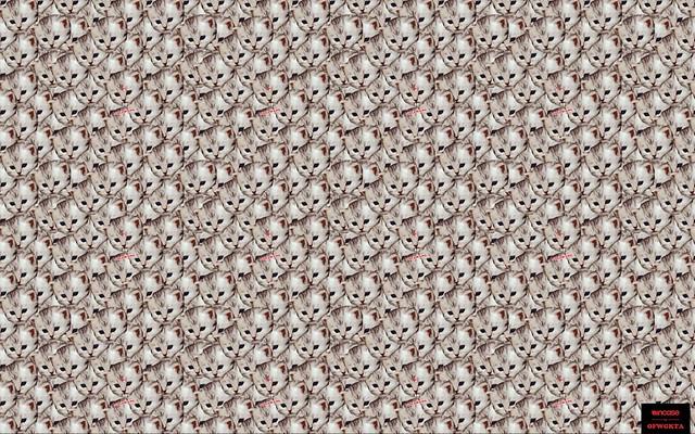 Golf Wang Cat Wallpapers - Top Free Golf Wang Cat ... |Catwang Wallpaper
