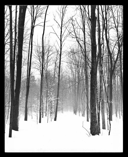 winter bw tree fog blackwhite explore iphone phoneography iphoneography snapseed uploaded:by=flickrmobile flickriosapp:filter=nofilter