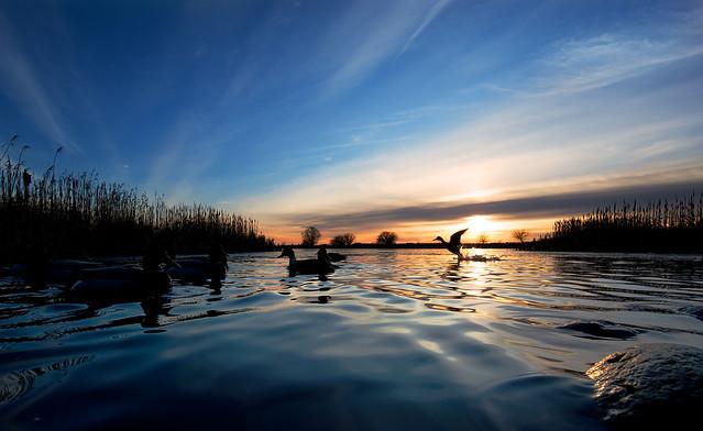 Winter Reifel Migratory Bird Sanctuary at Sunset