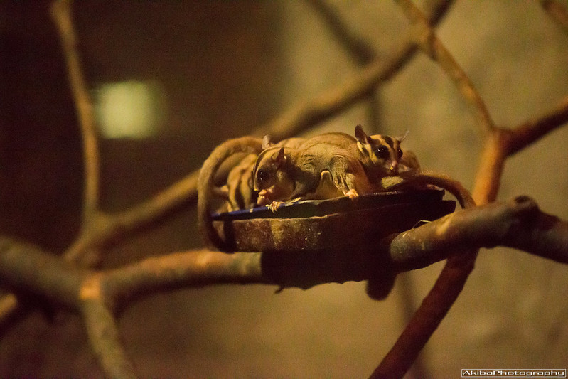 Ueno Zoological Gardens #21