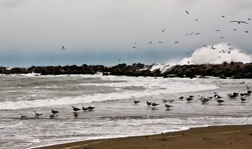 birds in a storm by enjoiskate8 via I {heart} Rhody