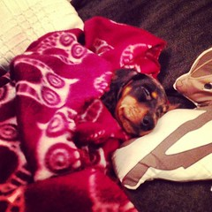 I guess somebody is sleepy from all the whining done last night! #lolathesausage