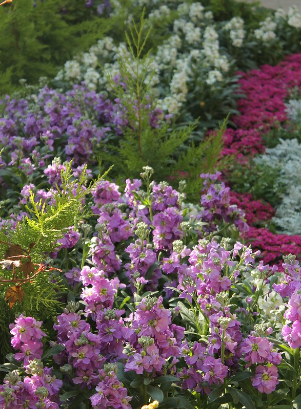 Kansas City Botanical Gardens >> Now Showing In The Conservatory Powell Gardens Kansas