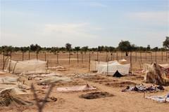 (Les habitants du village de Seyeen Gababé auraient besoin de clôtures pour protéger leur potager. Crédit photo : Anna Jefferys / IRIN)