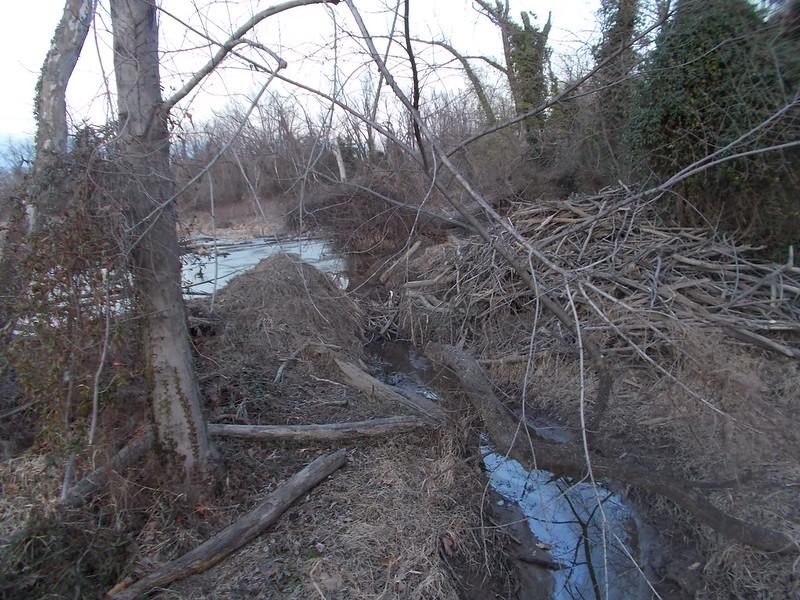 Beaver Dam Gash