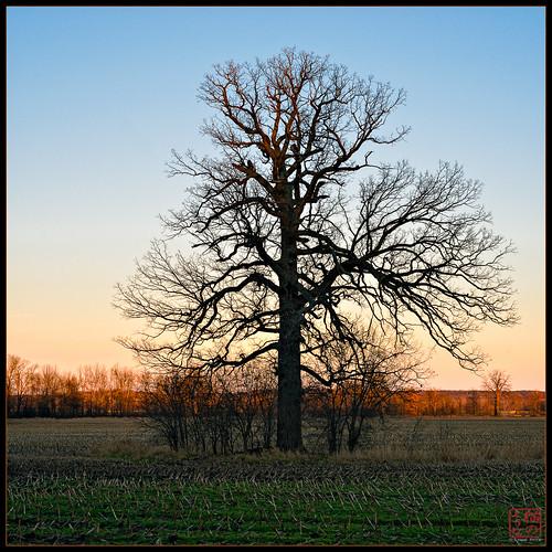 travel sunset newyork tree ma unitedstates walk greenway geneseo piffard winter2012