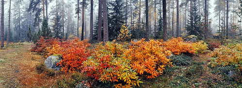 camera autumn panorama color forest panoramic
