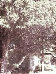Big Tree Take Over
