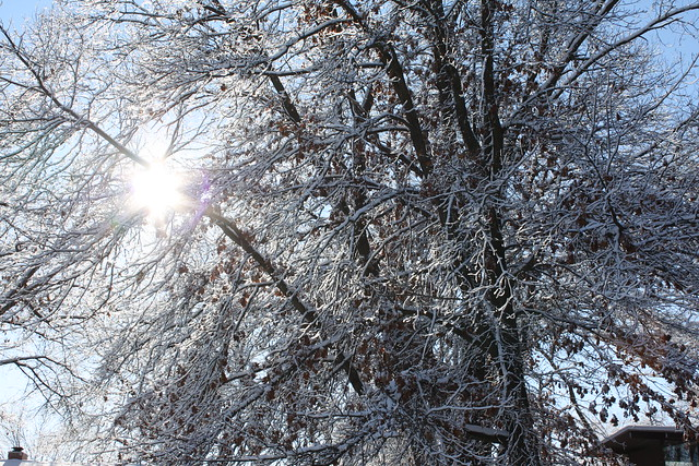Snow Much Fun: Sun through the trees