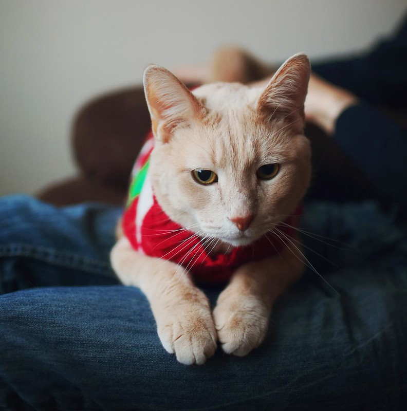 Happy Holidays (Cats In Christmas Sweaters) - Sara Lynn Paige ...