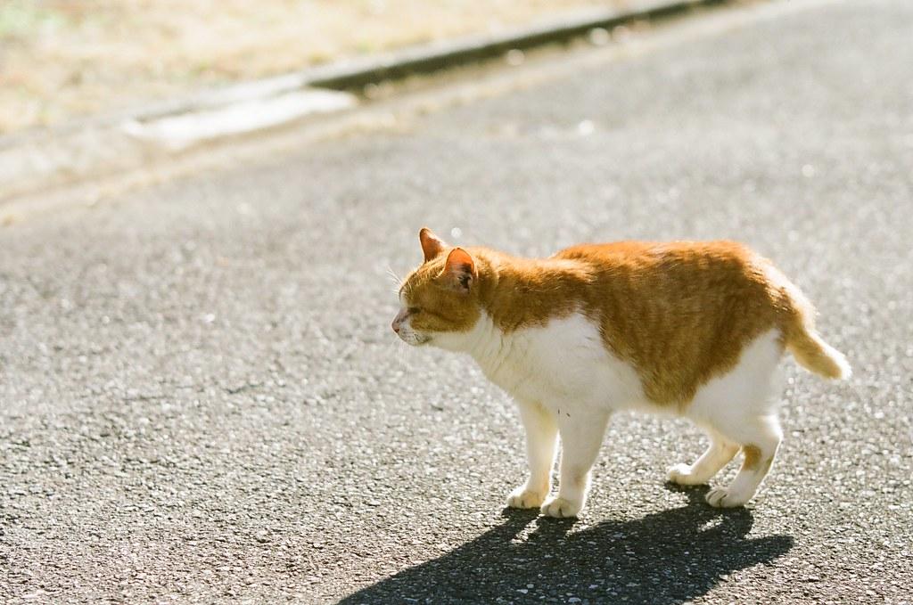 表参道の猫