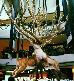 Reindeer at IFC