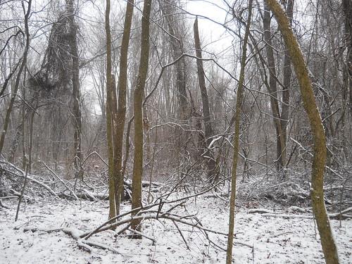 vinesandtangles snow hiddenmarshsanctuary threeriversmi mi swmlc