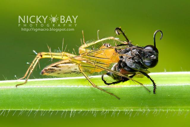 Lynx Spider (Oxyopidae) - DSC_0148