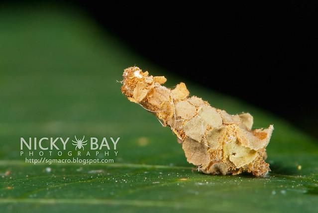 Caterpillar? - DSC_6795