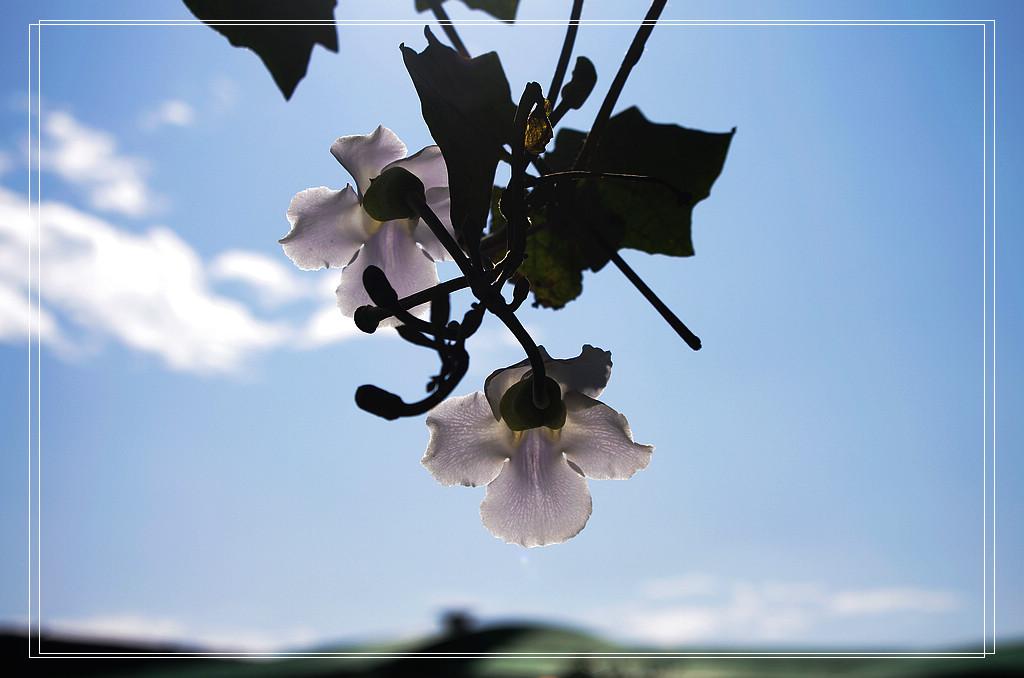 2012年末的中社觀光花市走拍