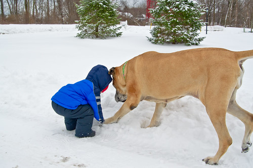 Searching for Snowballs