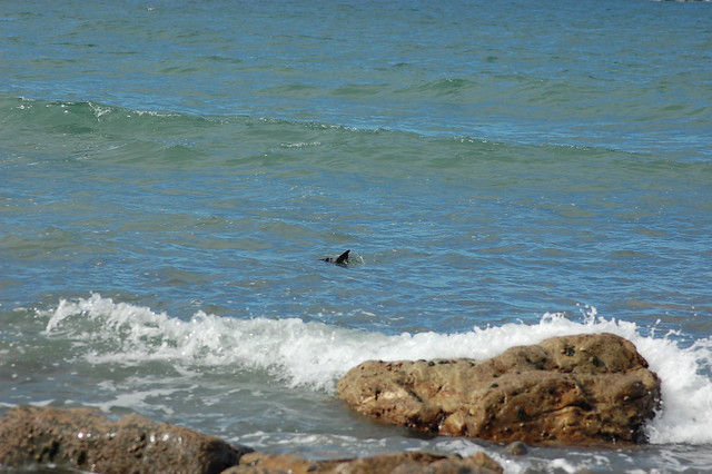A seal fin in azure blue water