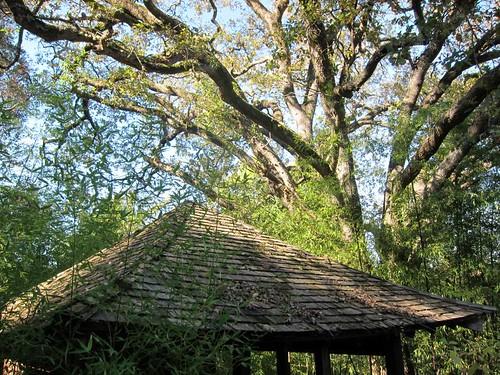 Hakone Japanese Gardens, Saratoga, CA IMG_2357