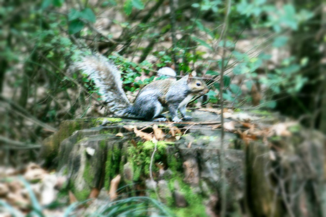 6.365 {Squirrel-y}