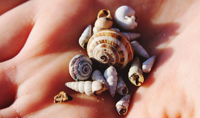 snail shells 2