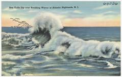 Sea gulls dip over breaking waves at Atlantic Highlands, N. J.