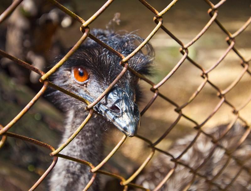 Saipan Zoo