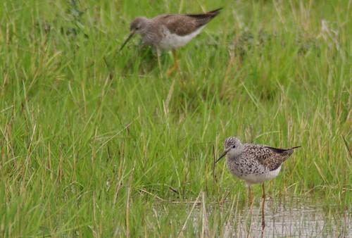 illinoisusabirds
